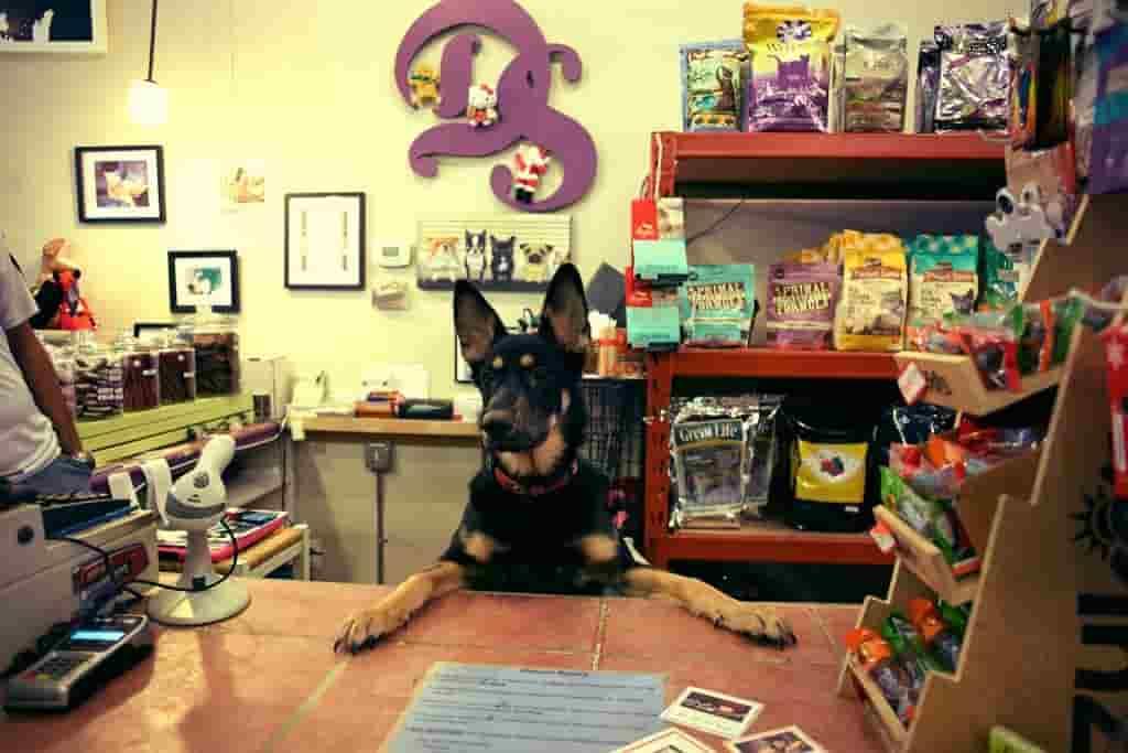 software de punto de ventas para petshop veterinarias y tiendas de mascotas